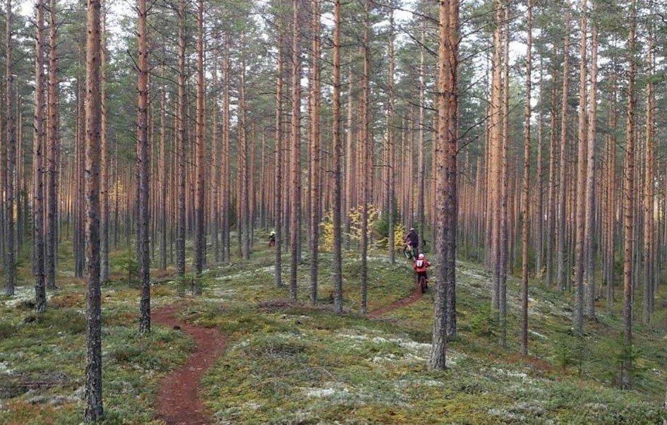 Kuukauden ulkoiluteko: Suonenjoen Lintharjulle hieno maastopyöräilyreitistö