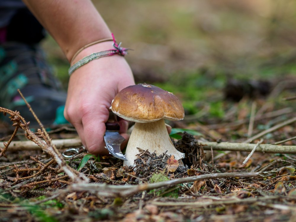 Yhdessä sieniretkelle!