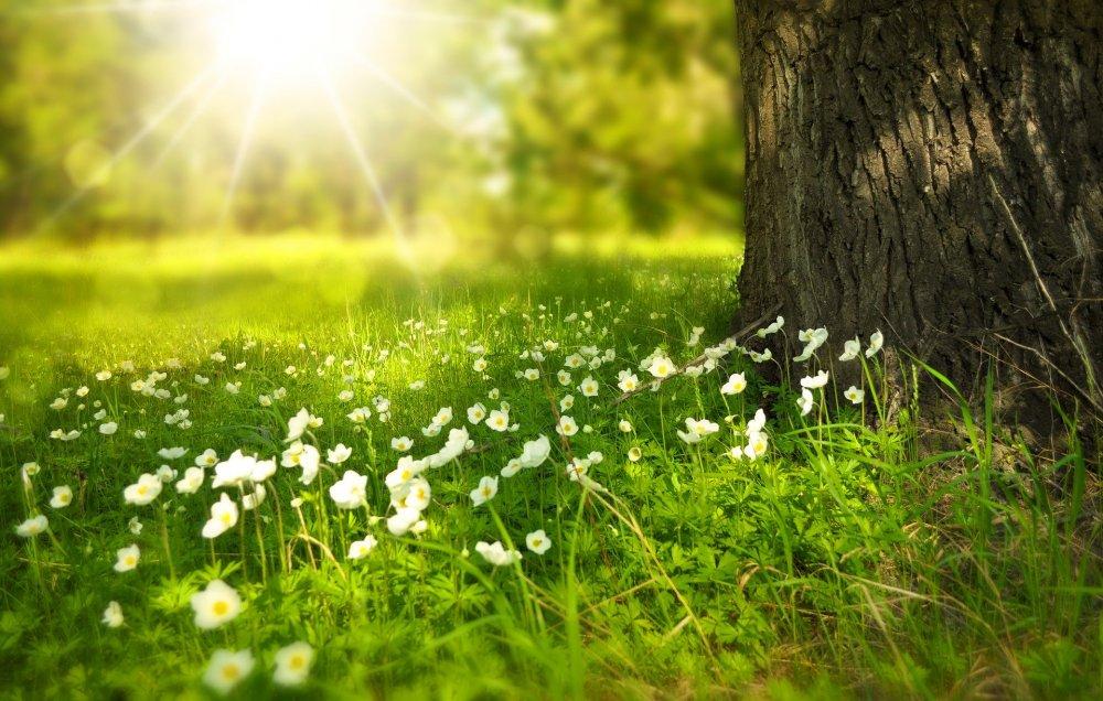 Suomen Ladun kevätkokous toteutuu etänä